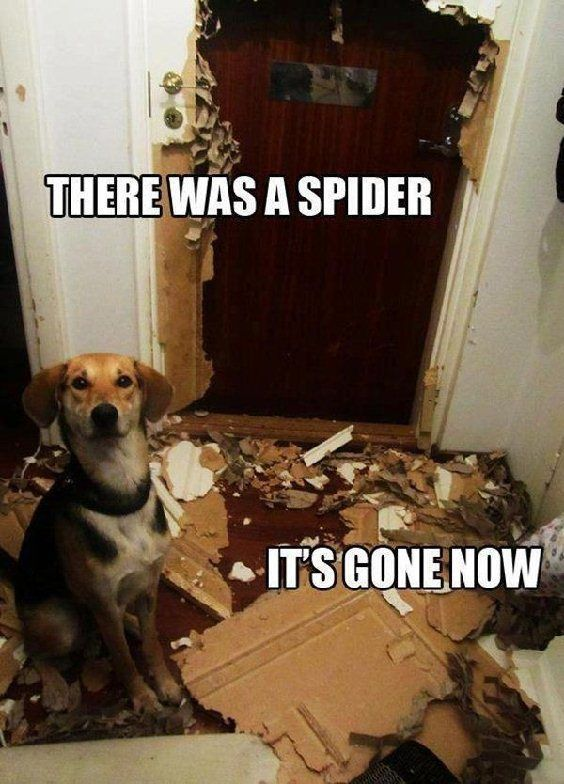 There Was A Spider, Its Gone Now Pictures, Photos, and ...