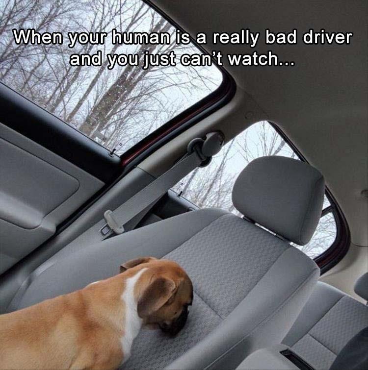 Bluetooth Cbr Driver - readingrutracker