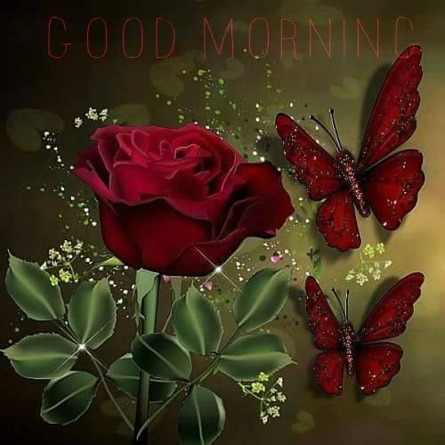 Red Butterfly Rose Good Morning Image Pictures Photos