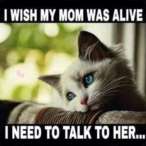 where's mom i want to see my mom now!!!!! you bette...