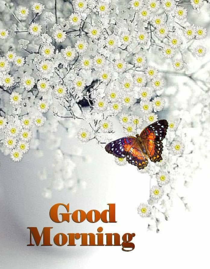 White flower good morning butterfly image pictures photos and white flower good morning butterfly image mightylinksfo