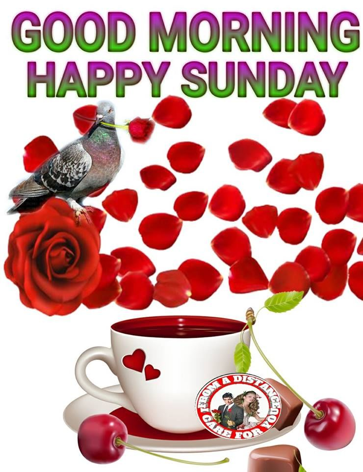 Good Morning Sunday Rose : Rose happy sunday good morning pictures photos and