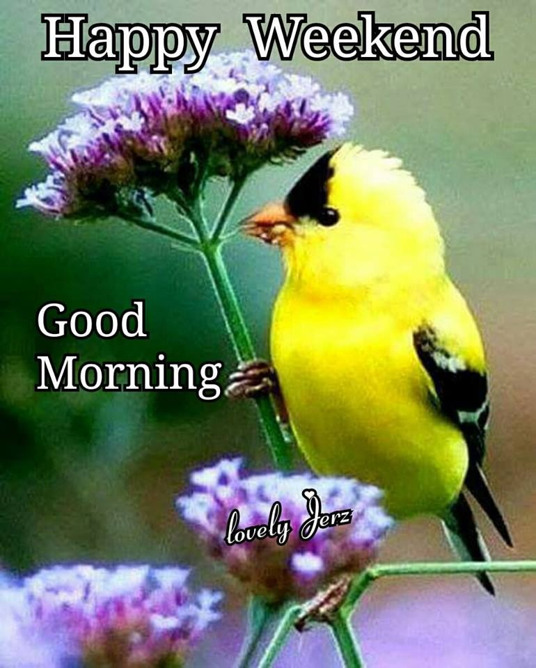 Yellow Bird Happy Weekend Good Morning Pictures, Photos ...