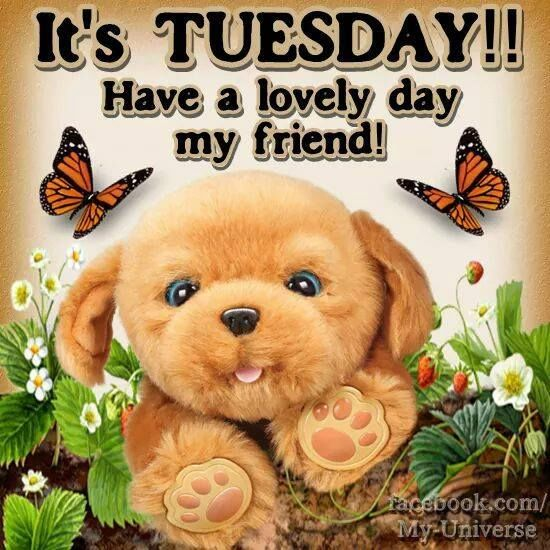 Its Tuesday Puppy Its Tuesd...