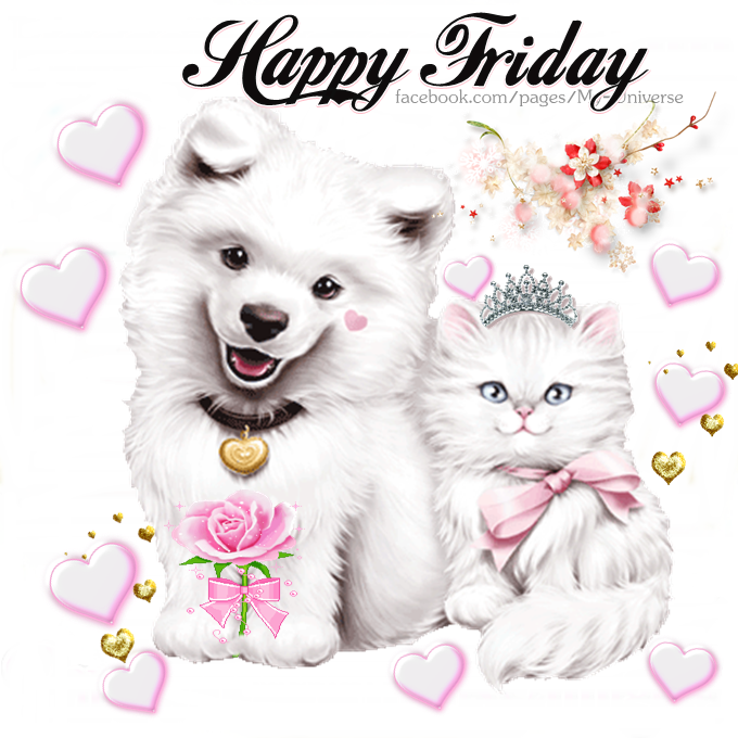 White Dog & Cat Happy Friday Pictures, Photos, and Images ...