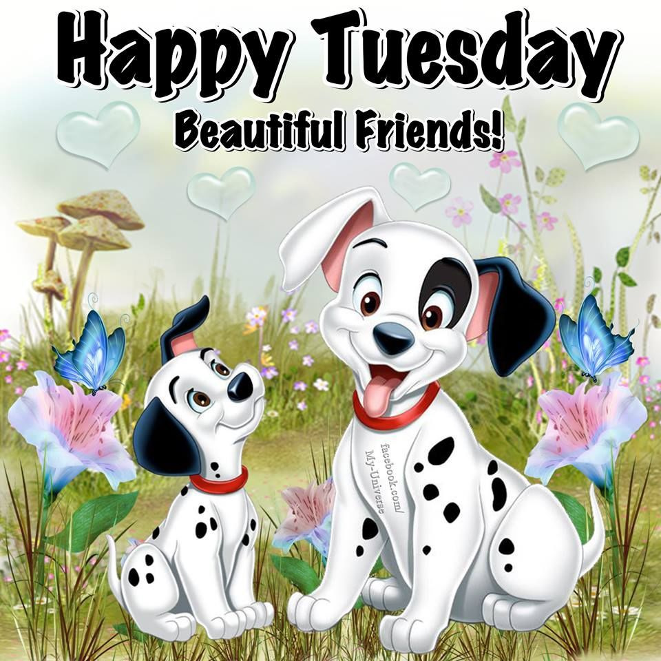 Dalmatian Happy Tuesday Quote Pictures Photos And Images