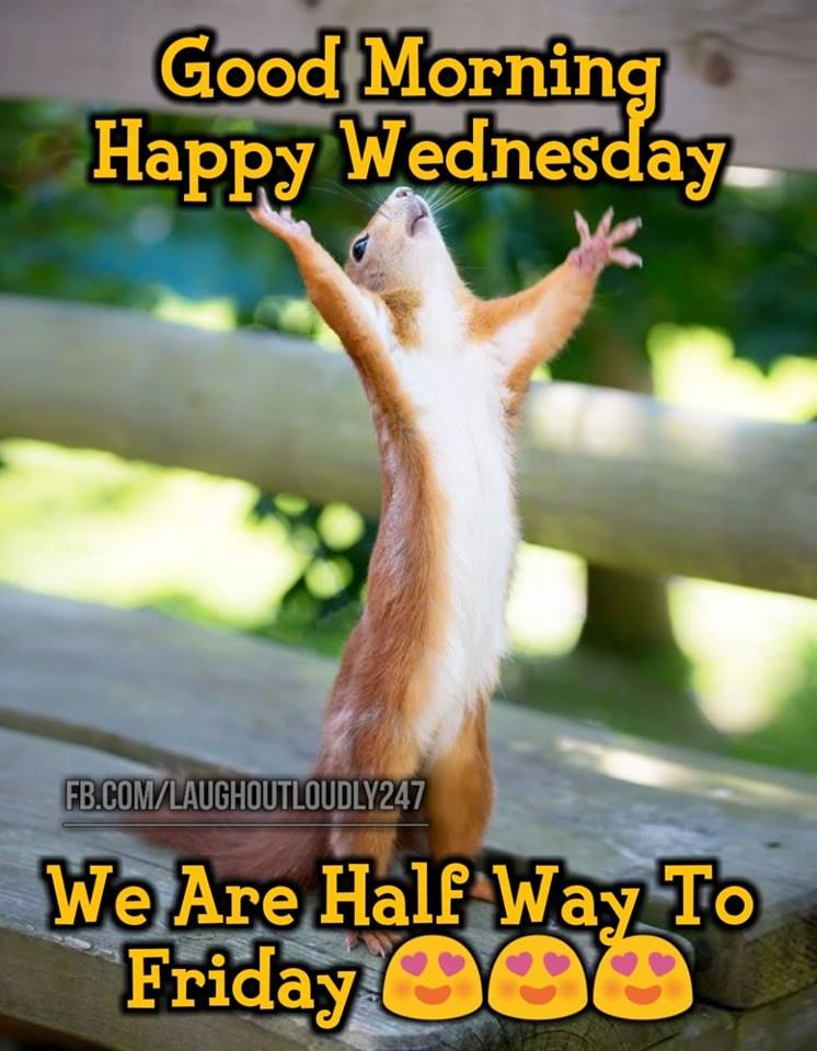 We Are Halfway To Friday, Good Morning Happy Wednesday