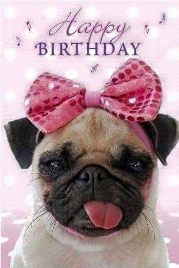 Happy Birthday Pug Pictures Photos And Images For Facebook Tumblr
