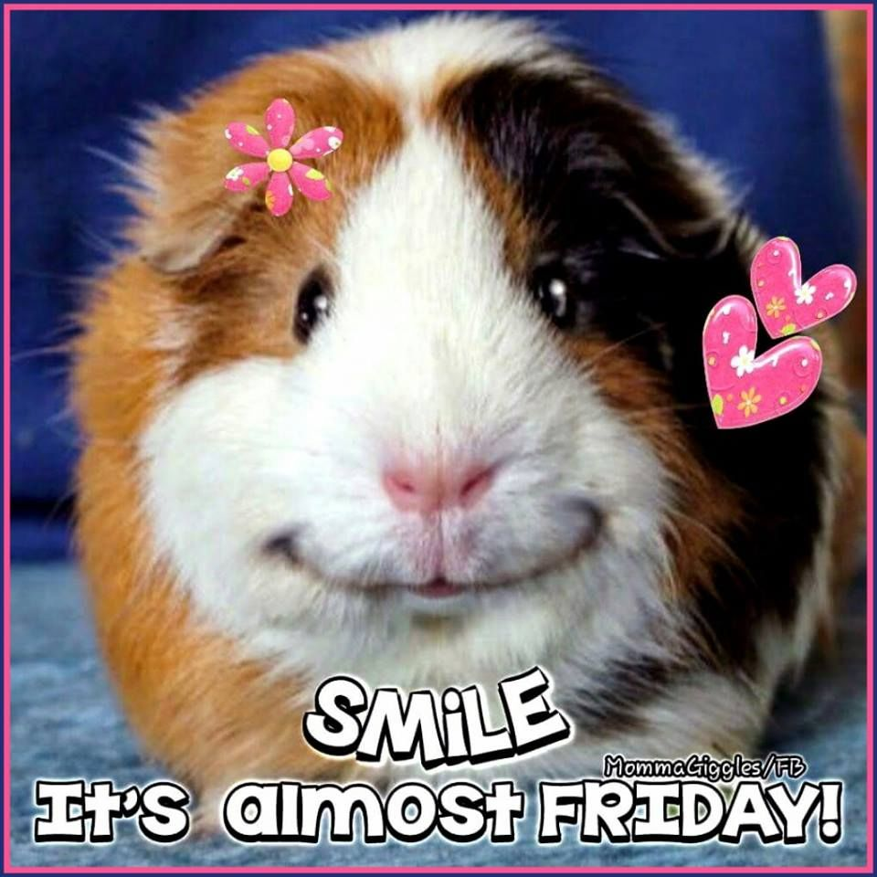 67 Best Trending News Viral Videos Images On Pinterest: Smile Its Almost Friday! Pictures, Photos, And Images For