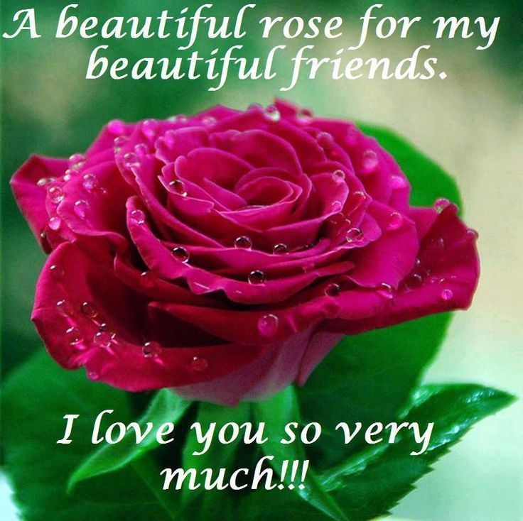 Love Finds You Quote: A Beautiful Rose For My Beautiful Friends. I Love You So