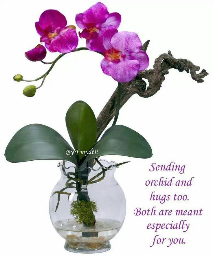 Sending Orchids And Hugs Too Both Are Meant Especially