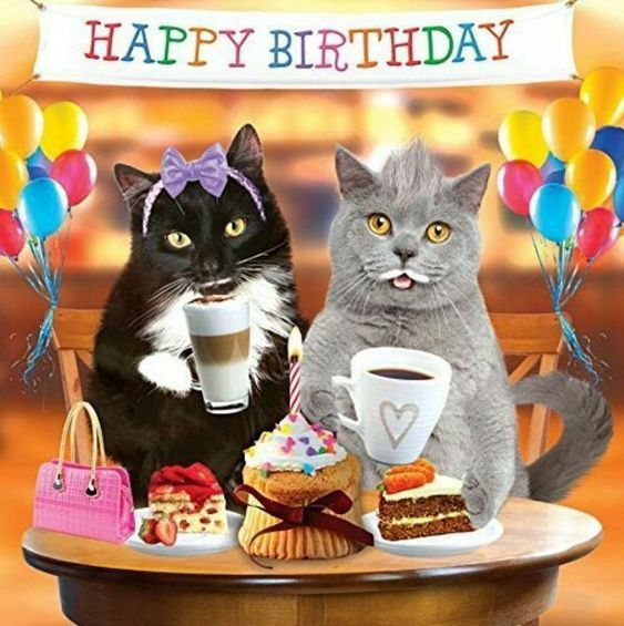 Celebrating Cat Happy Birthday Pictures, Photos, And