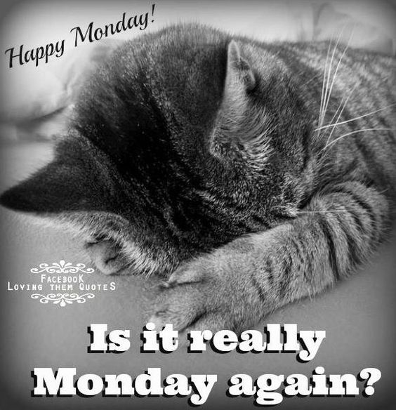 Happy Days Are Here Again Quotes: Is It Really Monday Again? Pictures, Photos, And Images