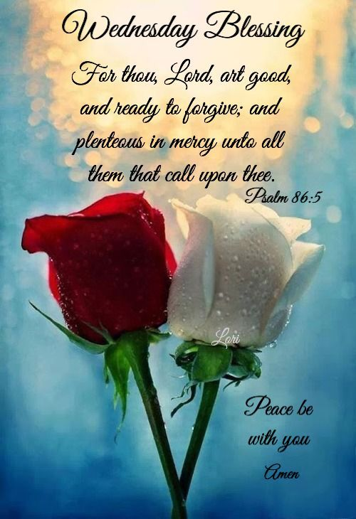 Red And White Rose Wednesday Blessing Pictures, Photos