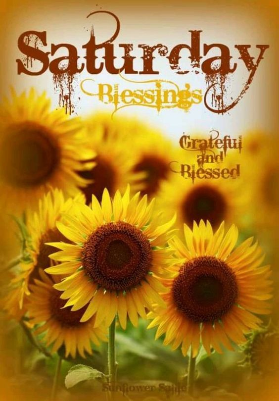 Sunflower Saturday Blessings Image Pictures Photos And