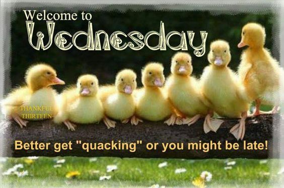 Ducky Welcome To Wednesday Quote Pictures Photos And