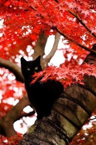 Image result for cats in autumn leaves