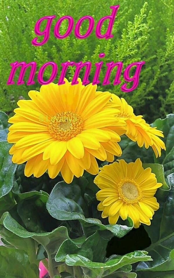 Yellow flower good morning quote pictures photos and images for yellow flower good morning quote mightylinksfo