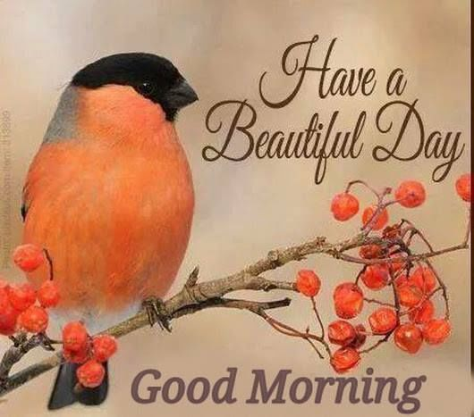 Beautiful Day Good Morning Pictures, Photos, and Images