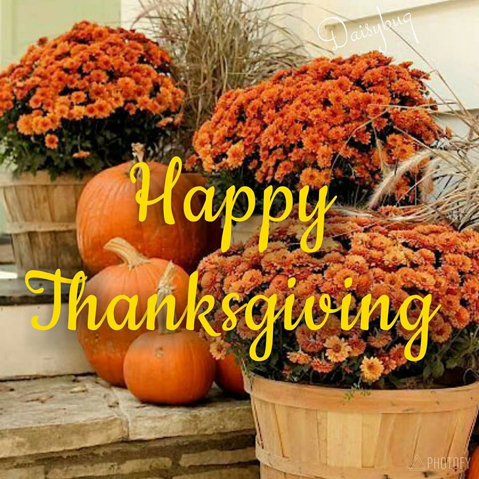 Orange Floral Happy Thanksgiving Quote Pictures, Photos