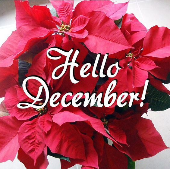 Poinsettia Hello December Quote Pictures, Photos, and ...