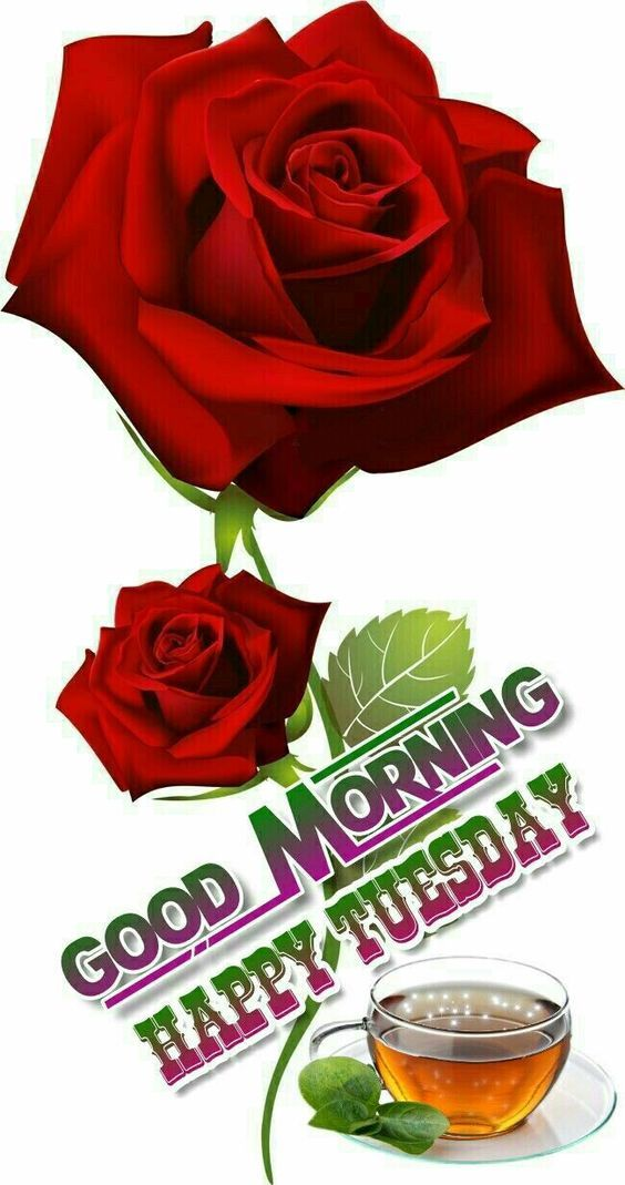 Two Rose Good Morning Happy Tuesday Pictures, Photos, and