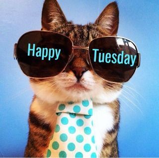 Image result for happy tuesday cat