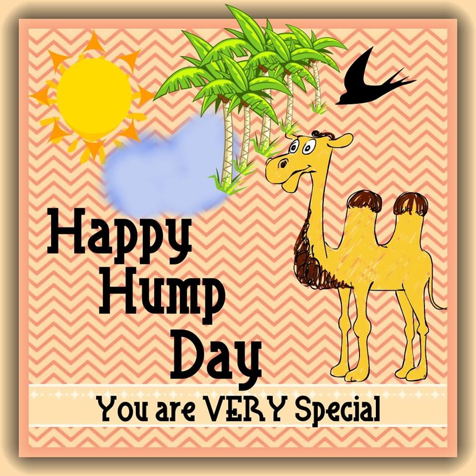 camel happy hump day quote pictures photos and images for