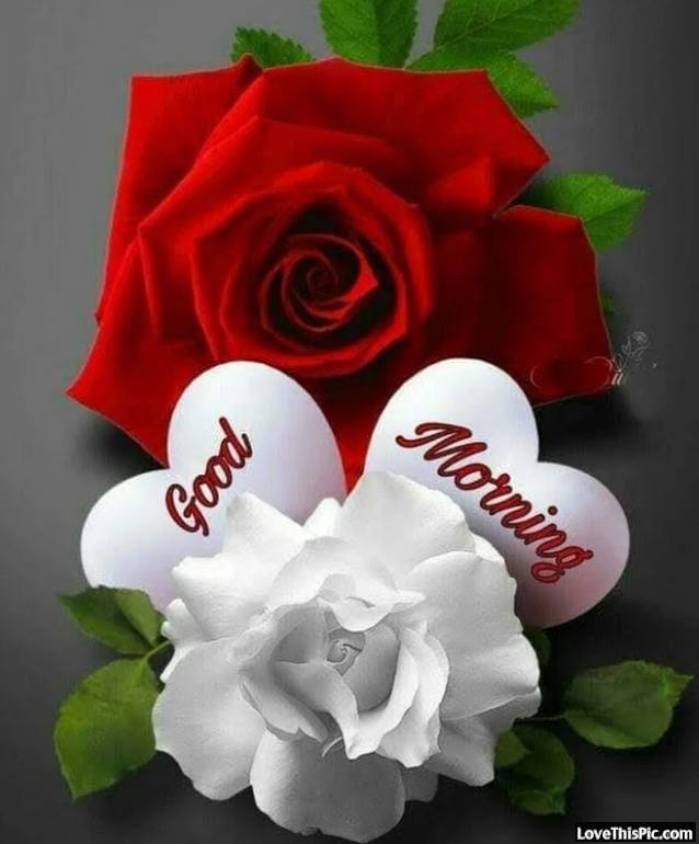 Red And White Flowers Good Morning Pictures Photos And Images For