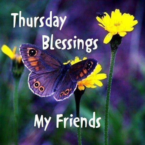 Butterfly Thursday Blessings Pictures Photos And Images