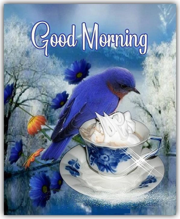 Beautiful Blue Bird Good Morning Quote Pictures, Photos
