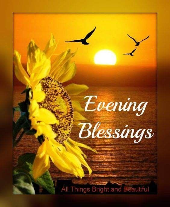 Sunflower Evening Blessing Pictures, Photos, and Images