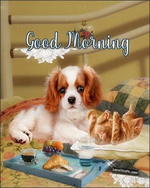 Puppy And Kitten Good Morning Pictures, Photos, and Images