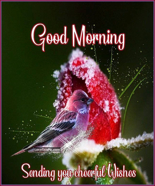 Good Morning Sending You Cheerful Wishes Pictures, Photos, and Images for Facebook, Tumblr, Pinterest, and Twitter
