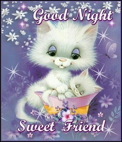 Cute Cat Good Night Friend Image Pictures, Photos, and