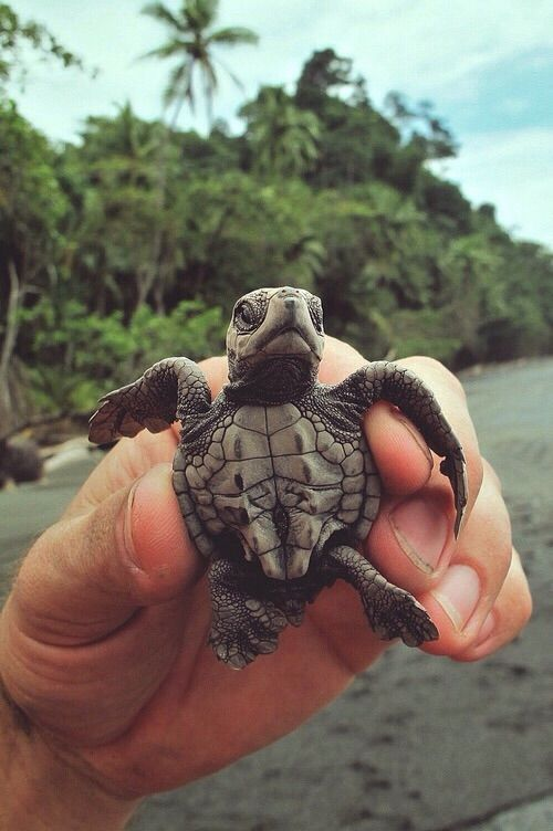 Small Baby Turtle Pictures, Photos, and Images for