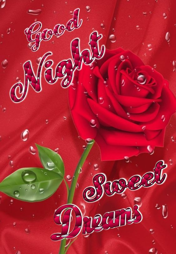 Wet Rose Good Night Sweet Dreams Pictures, Photos, and
