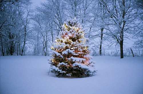 Christmas Tree Snow.Christmas Tree In The Snow Pictures Photos And Images For