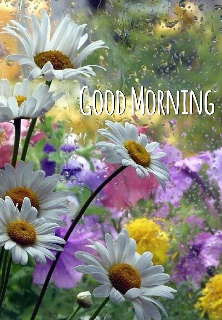Good Morning Rainy Flowers Pictures, Photos, and Images