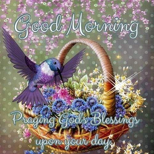 flying hummingbird good morning god blessing pictures