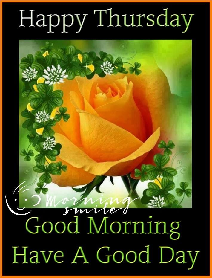 Orange Rose Thursday Morning Quote Pictures, Photos, and