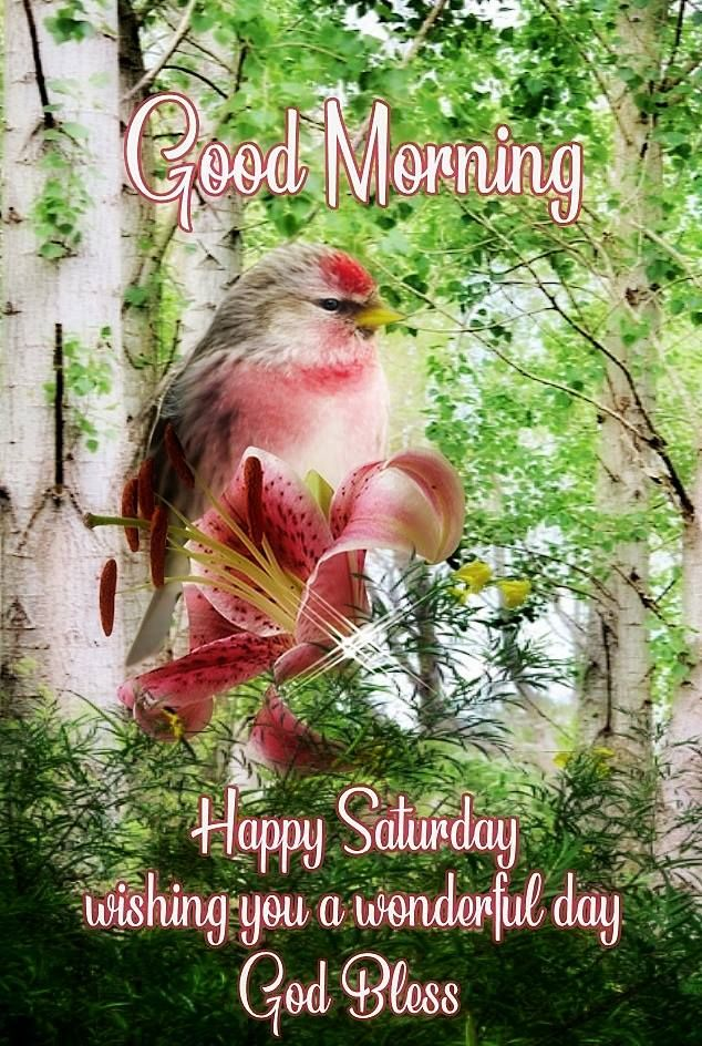Wishing You A Wonderful Day, Happy Saturday Pictures