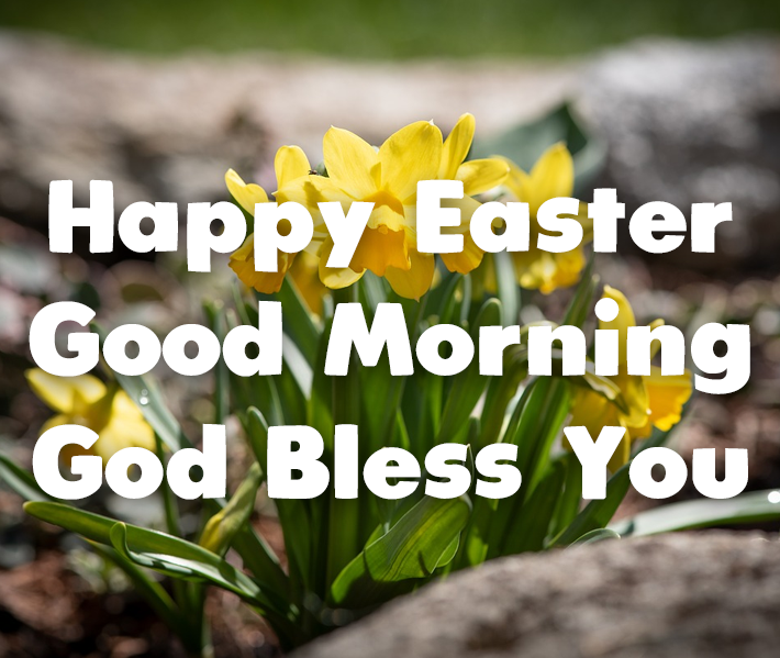 Happy Easter Pictures With Quotes: Daffodil Happy Easter Good Morning Quote Pictures, Photos