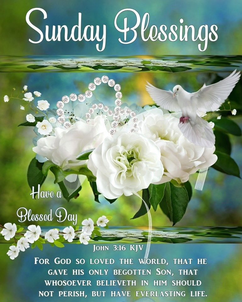 Sunday Blessings Flowers And Dove Pictures Photos And Images For Facebook Tumblr Pinterest And Twitter