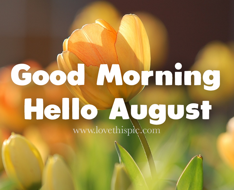 Tulip Good Morning August Quote Pictures, Photos, and Images