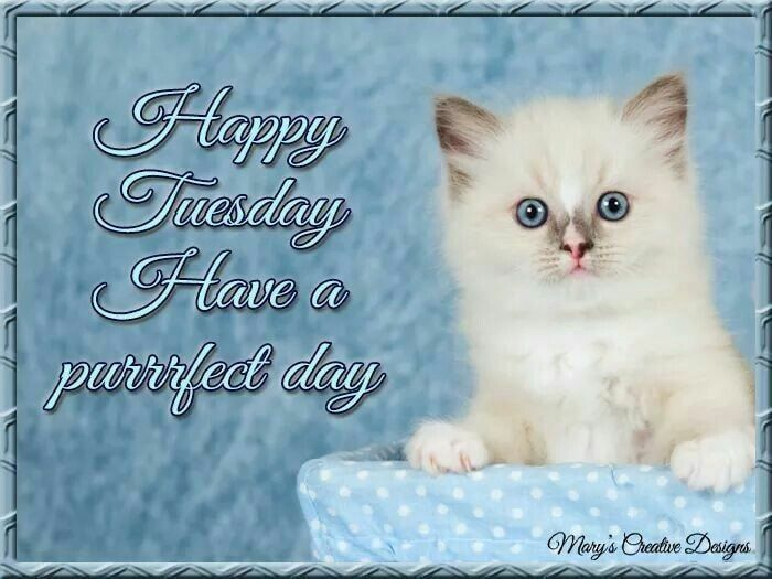 360109-Have-A-Purrfect-Day-Happy-Tuesday.jpg