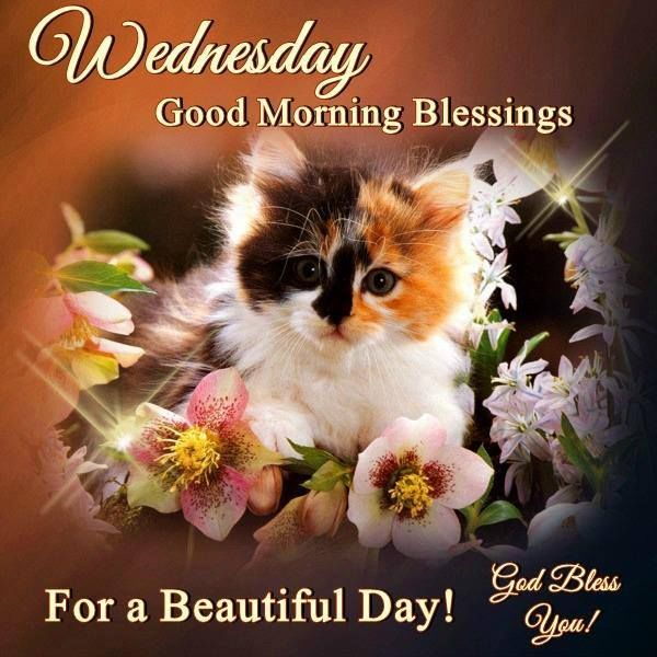 Cute Kitten Wednesday Good Morning Blessings Pictures