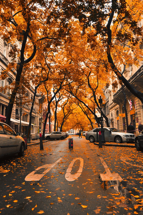 Fall Rain Coffee Time moreover The Road Ahead besides Good Night May You Fall Asleep Quickly And Sleep Like A Baby together with Fakestalk moreover Cute Owl In The Fall. on fall halloween parties