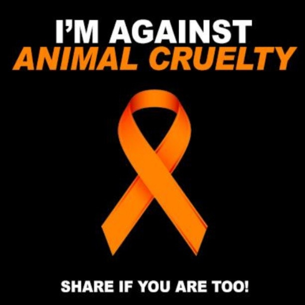 Animal Abuse Quotes Stunning Im Against Animal Cruelty Pictures Photos And Images For