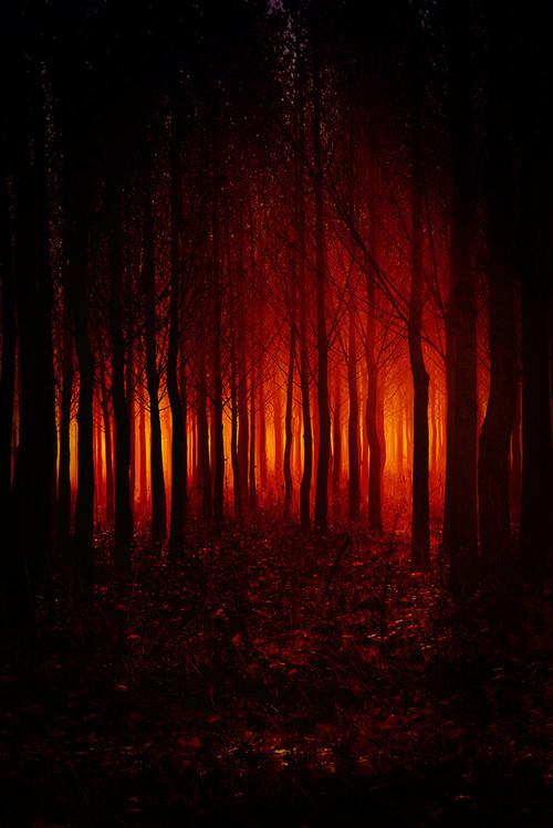 36338-Evil-Forest.jpg